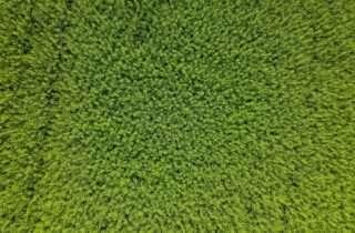 carpet pile